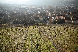 Warming Winter (Almost) Cuts Off a Sweet Wine Tradition in Germany